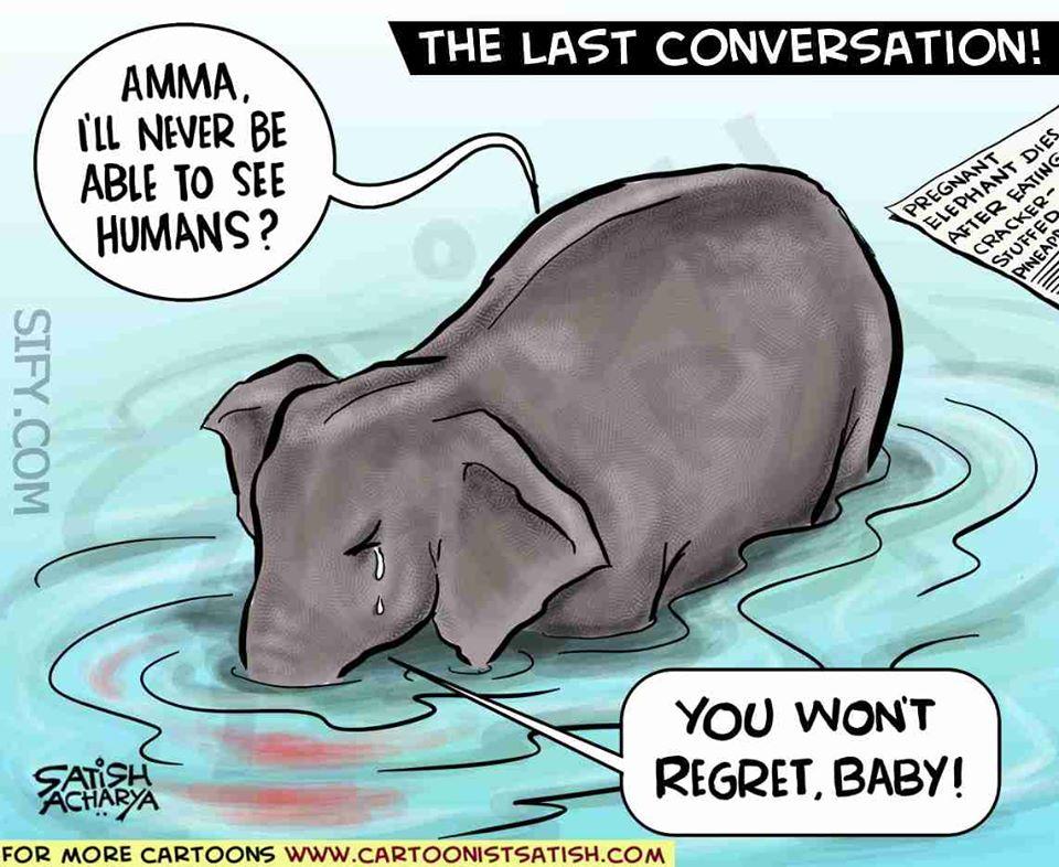 Vụ voi mẹ mang thai chết tức tưởi vì ăn phải dứa nhồi pháo nổ: Những bức tranh tưởng niệm chứa đựng nỗi đau khiến thế giới phải suy ngẫm-13