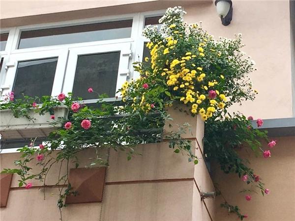 Ngắm ngôi nhà ở quê của ca sĩ Bích Phương, ngập tràn sắc hoa lung linh-2