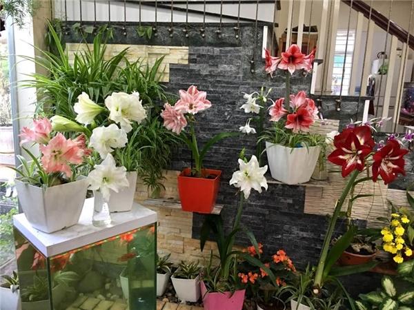 Ngắm ngôi nhà ở quê của ca sĩ Bích Phương, ngập tràn sắc hoa lung linh-4
