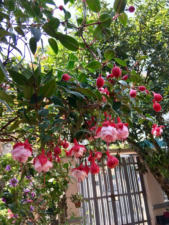Ngắm ngôi nhà ở quê của ca sĩ Bích Phương, ngập tràn sắc hoa lung linh-5