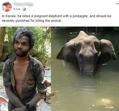 Sự thật về người đàn ông bị nghi là thủ phạm cho voi mẹ ăn trái dứa có thuốc nổ để rồi chết đứng trên sông-2