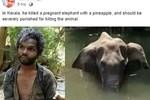 Sự thật về người đàn ông bị nghi là thủ phạm cho voi mẹ ăn trái dứa có thuốc nổ để rồi chết đứng trên sông