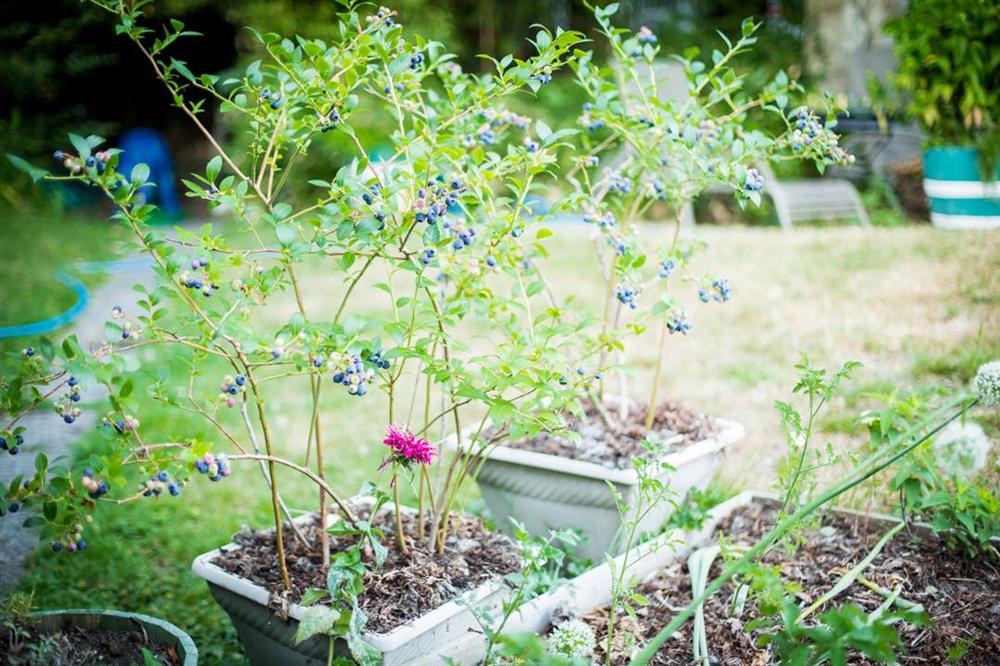 Cô gái xinh đẹp luôn tràn ngập năng lượng hạnh phúc khi trồng cả khu vườn toàn rau quả sạch-2