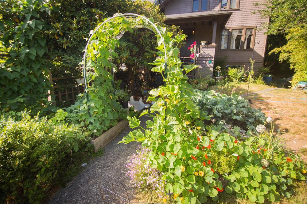 Cô gái xinh đẹp luôn tràn ngập năng lượng hạnh phúc khi trồng cả khu vườn toàn rau quả sạch-3