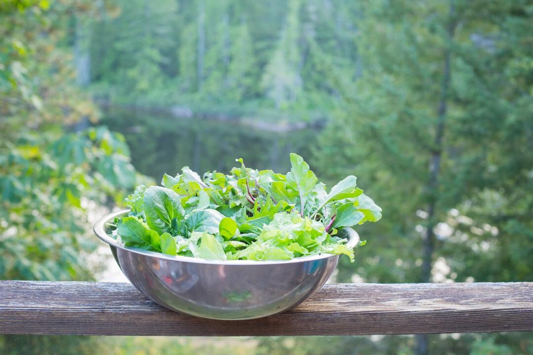 Cô gái xinh đẹp luôn tràn ngập năng lượng hạnh phúc khi trồng cả khu vườn toàn rau quả sạch-24