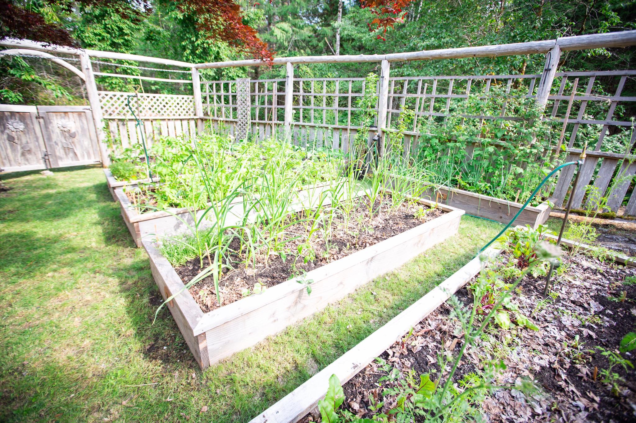 Cô gái xinh đẹp luôn tràn ngập năng lượng hạnh phúc khi trồng cả khu vườn toàn rau quả sạch-28