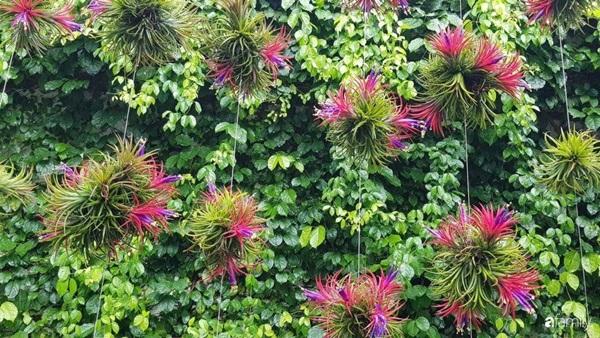 Khu vườn toàn những cây độc lạ của người phụ nữ yêu thiên nhiên ở Cần Thơ-3