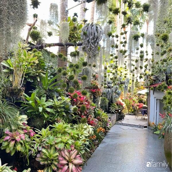 Khu vườn toàn những cây độc lạ của người phụ nữ yêu thiên nhiên ở Cần Thơ-12