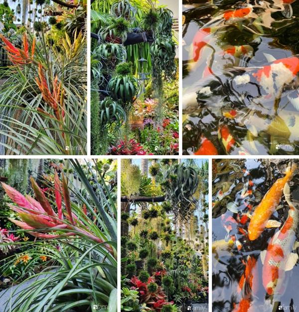 Khu vườn toàn những cây độc lạ của người phụ nữ yêu thiên nhiên ở Cần Thơ-14
