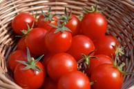 Cách bảo quản cà chua chuẩn nhất, tha hồ để mà không lo thối hỏng