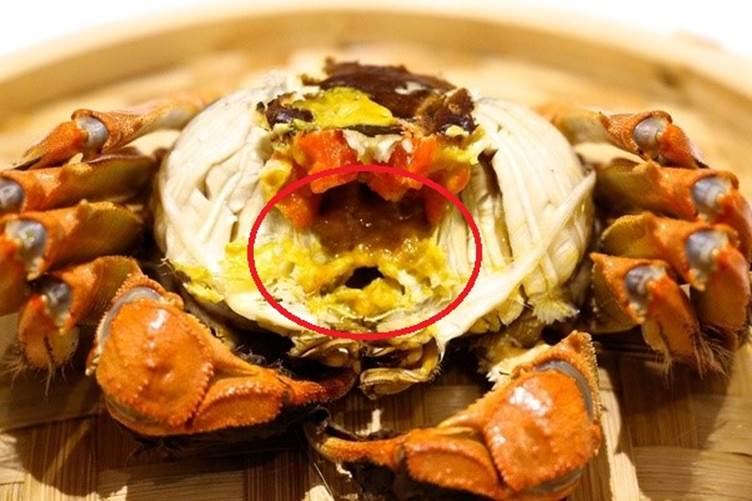 Ăn hải sản mấy chục năm ai nghĩ đơn giản PHẦN MÀU VÀNG trong con cua biển là GẠCH đều sai hết rồi nhé!-1
