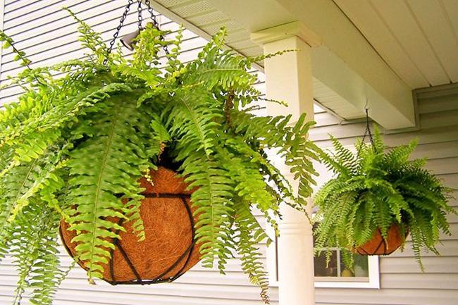 15 loại cây cảnh không chỉ tốt trong phong thủy mà còn có tác dụng lọc sạch không khí, nhà nào cũng nên có 1 cây-8