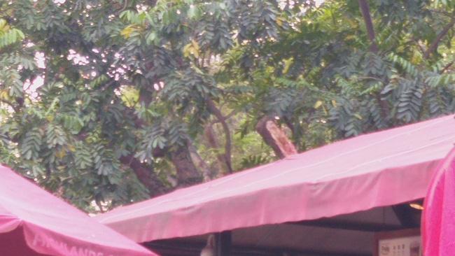 Hà Nội: Cành cây gãy trúng quán cà phê khiến nhiều người chạy tán loạn-2