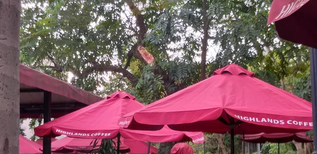 Hà Nội: Cành cây gãy trúng quán cà phê khiến nhiều người chạy tán loạn-3