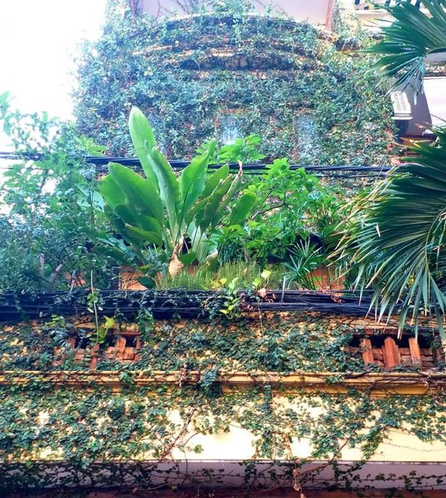 Vườn cây, ao cá đẹp mê trên sân thượng tầng 4 của ông chủ quán phở Sài Gòn-2