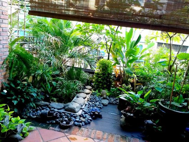 Vườn cây, ao cá đẹp mê trên sân thượng tầng 4 của ông chủ quán phở Sài Gòn-3