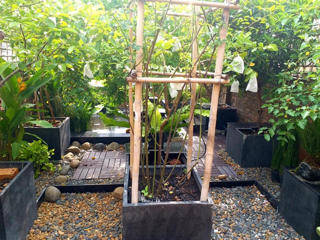 Vườn cây, ao cá đẹp mê trên sân thượng tầng 4 của ông chủ quán phở Sài Gòn-5