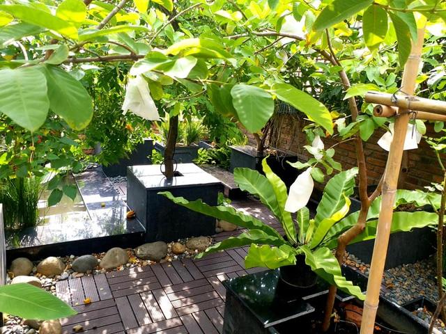 Vườn cây, ao cá đẹp mê trên sân thượng tầng 4 của ông chủ quán phở Sài Gòn-6