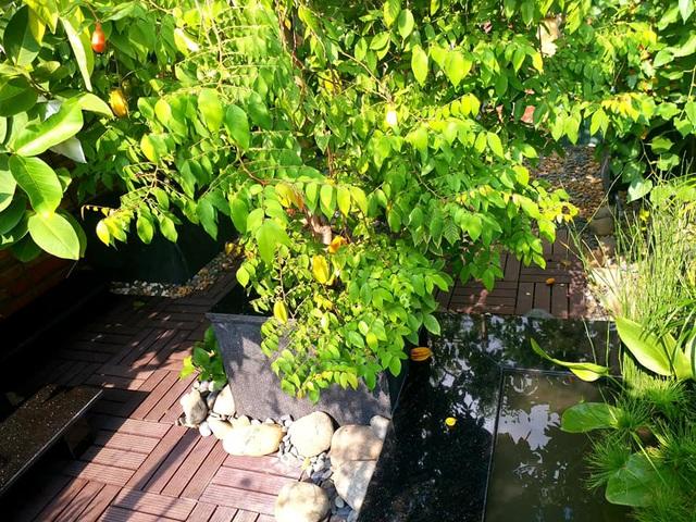 Vườn cây, ao cá đẹp mê trên sân thượng tầng 4 của ông chủ quán phở Sài Gòn-7