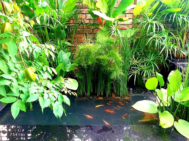Vườn cây, ao cá đẹp mê trên sân thượng tầng 4 của ông chủ quán phở Sài Gòn-11