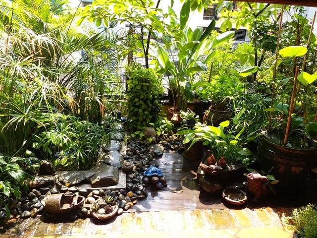 Vườn cây, ao cá đẹp mê trên sân thượng tầng 4 của ông chủ quán phở Sài Gòn-12