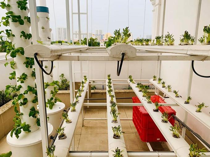 Ngắm vườn rau và nấm sạch do chính tay MC Đại Nghĩa tự trồng trên sân thượng nhà mình ở quận 7, TP HCM-2