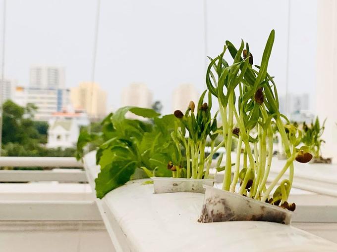 Ngắm vườn rau và nấm sạch do chính tay MC Đại Nghĩa tự trồng trên sân thượng nhà mình ở quận 7, TP HCM-3