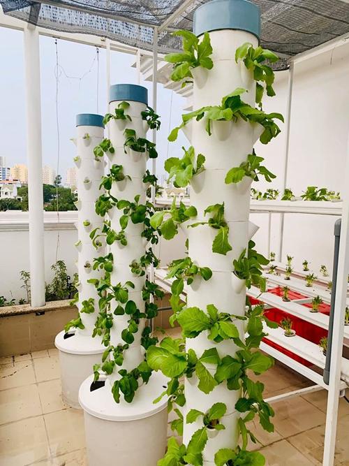 Ngắm vườn rau và nấm sạch do chính tay MC Đại Nghĩa tự trồng trên sân thượng nhà mình ở quận 7, TP HCM-9