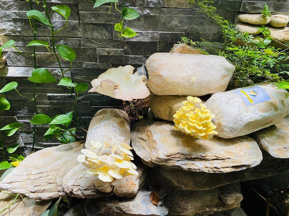 Ngắm vườn rau và nấm sạch do chính tay MC Đại Nghĩa tự trồng trên sân thượng nhà mình ở quận 7, TP HCM-10