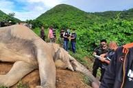 Mò vào vườn xoài kiếm thức ăn, voi bị điện giật chết, chủ vườn có nguy cơ bị truy tố hình sự