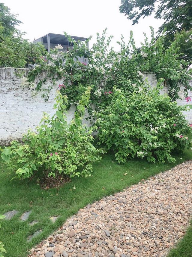 Mê mẩn khu vườn ngập tràn hoa lá của Khánh Thi, Duy Nam, Mai Ngọc-8