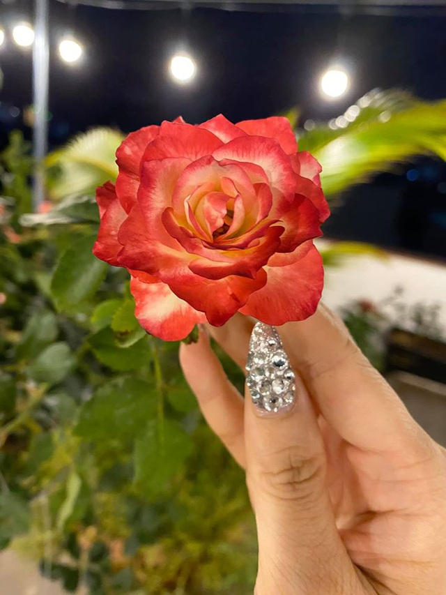 Mê mẩn khu vườn ngập tràn hoa lá của Khánh Thi, Duy Nam, Mai Ngọc-13