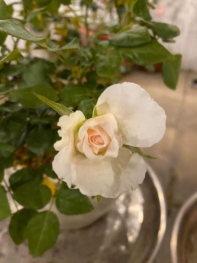 Mê mẩn khu vườn ngập tràn hoa lá của Khánh Thi, Duy Nam, Mai Ngọc-15
