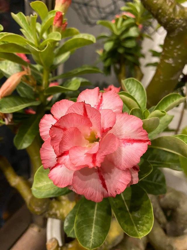 Mê mẩn khu vườn ngập tràn hoa lá của Khánh Thi, Duy Nam, Mai Ngọc-16