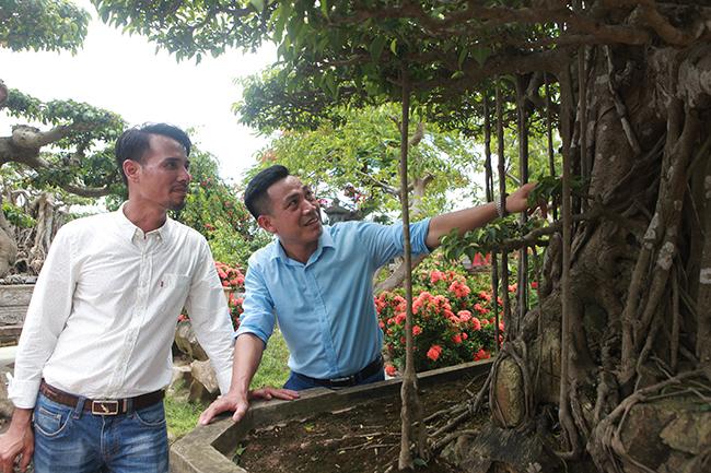 Đại gia Hà Nội chi 24 tỷ mua 2 cây sanh danh tiếng bậc nhất-7