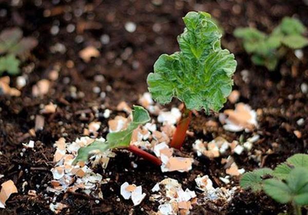 Tự trồng rau sạch mà không biết những mẹo làm vườn này thì quá phí-1