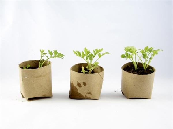 Tự trồng rau sạch mà không biết những mẹo làm vườn này thì quá phí-2