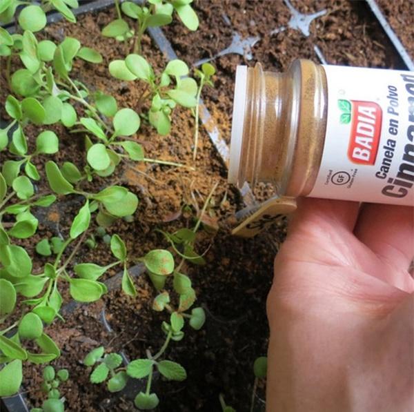 Tự trồng rau sạch mà không biết những mẹo làm vườn này thì quá phí-3