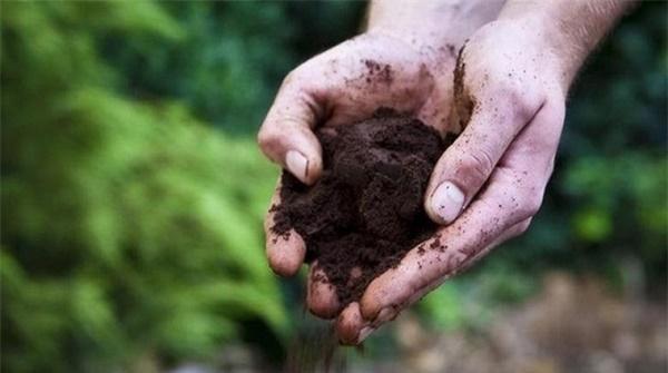 Tự trồng rau sạch mà không biết những mẹo làm vườn này thì quá phí-5