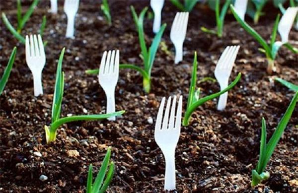 Tự trồng rau sạch mà không biết những mẹo làm vườn này thì quá phí-8