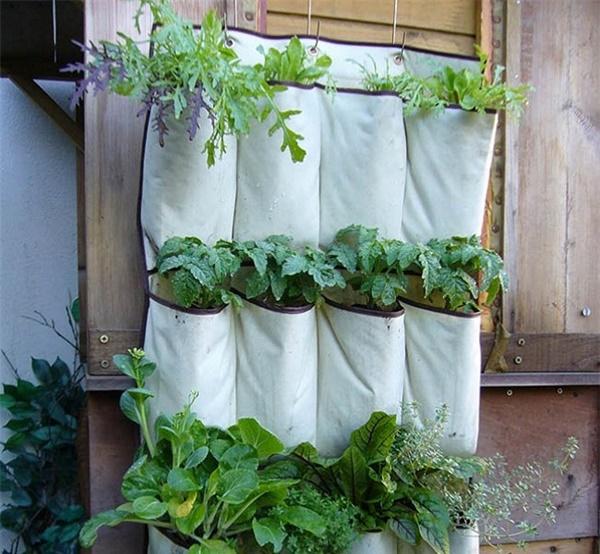 Tự trồng rau sạch mà không biết những mẹo làm vườn này thì quá phí-10