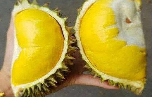 Thực hư sầu riêng mini Thái Lan, múi dày siêu ngon 50.000 đồng/quả-1