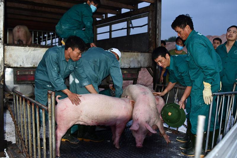 Tham lãi đậm, thịt lợn ế chợ, dân buôn quyết không giảm giá-1