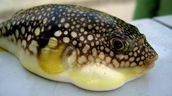 Đi tắm biển, ăn đồ biển, cần tránh xa những loại hải sản và sinh vật biển cực độc có thể gây chết người này-1