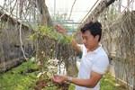 Mua 3 cây lan đột biến gene giá 32 tỷ, người thật việc thật ở Bình Phước-7