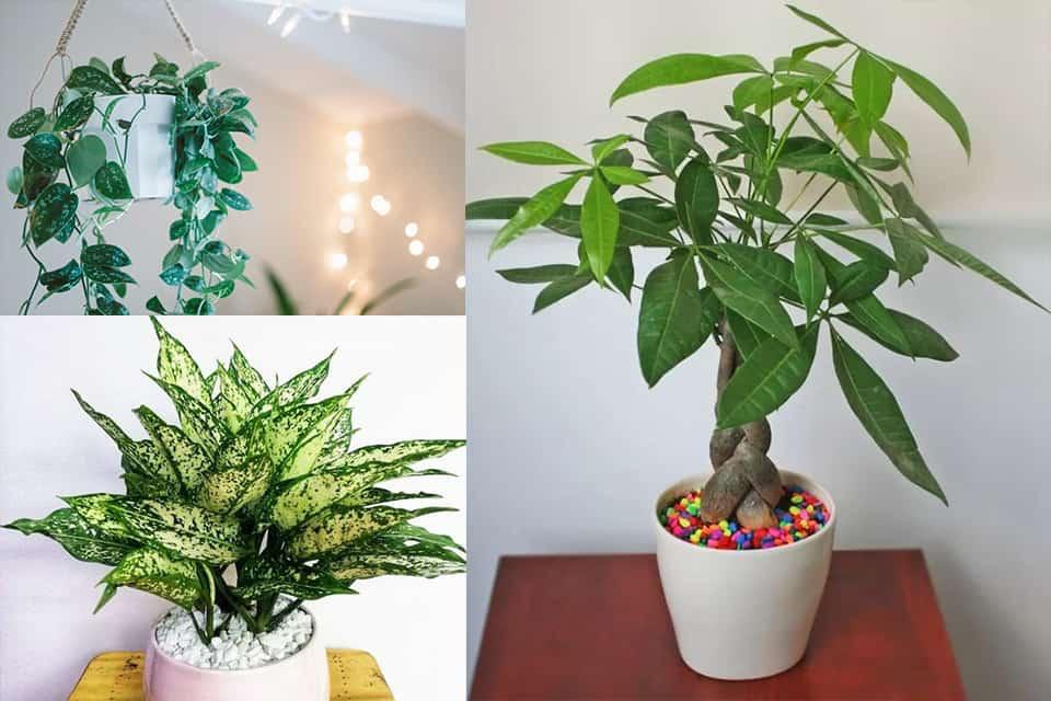 Đặt những loại cây này trong nhà, cuộc sống gia đình vừa tẻ nhạt vừa giảm vận may vì phá tan phong thủy-5