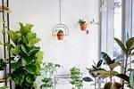 7 loại hoa đẹp hợp để phòng khách, hút tài lộc, không sớm thì muộn cũng giàu sang-5