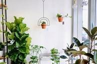 Đặt những loại cây này trong nhà, cuộc sống gia đình vừa tẻ nhạt vừa giảm vận may vì 'phá tan' phong thủy