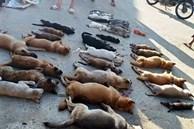 """Chó mèo bị đánh bả chết """"la liệt"""" trong đêm, dân vây bắt đôi nam nữ thủ phạm"""