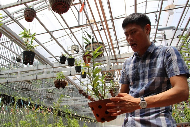 Mua 3 cây lan đột biến gene giá 32 tỷ, người thật việc thật ở Bình Phước-1